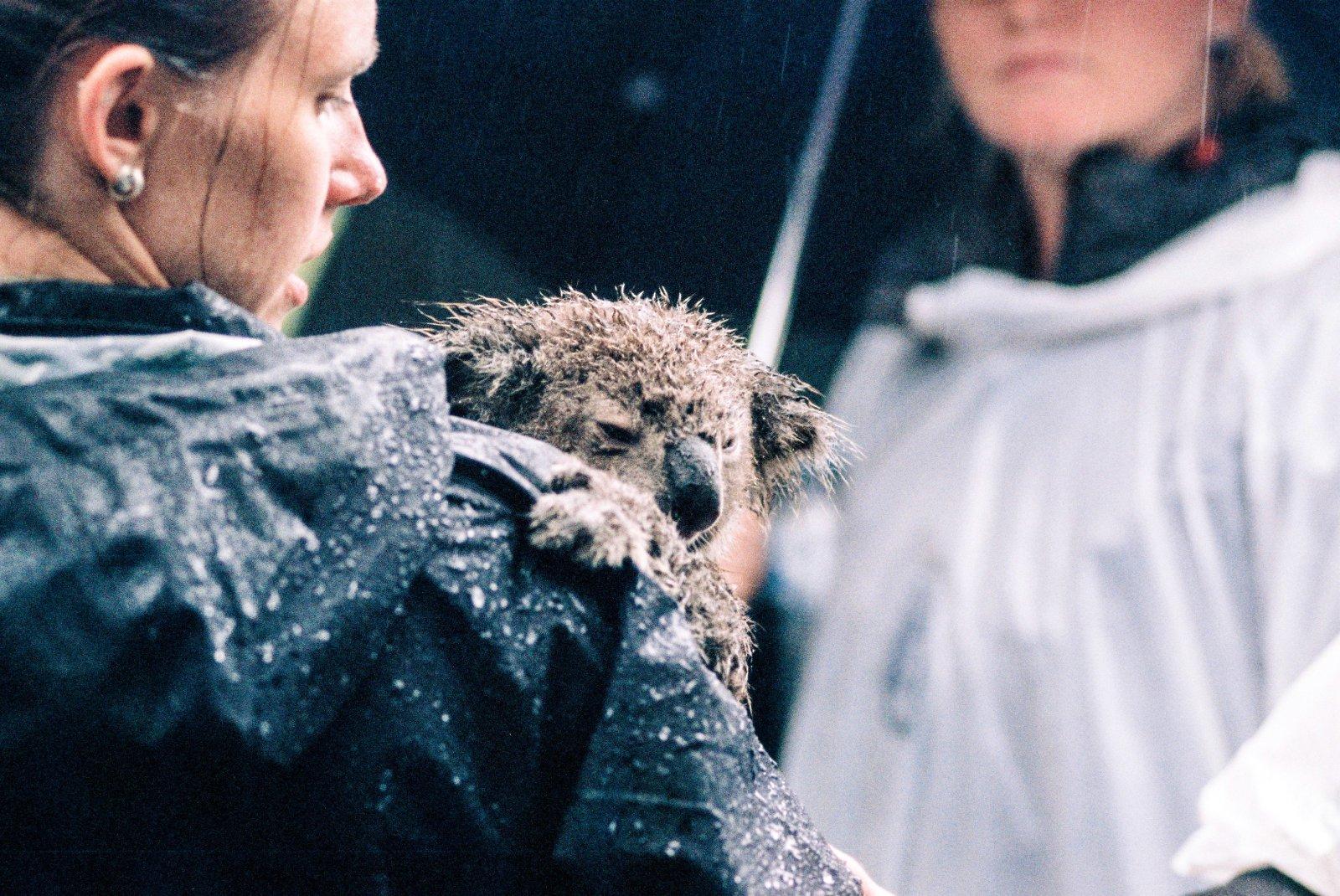 Entspannt, freundlich und unheimlich hilfsbereit gegenüber Mensch und Tier. Hier stimmt ein australisches Klischee voll und ganz.