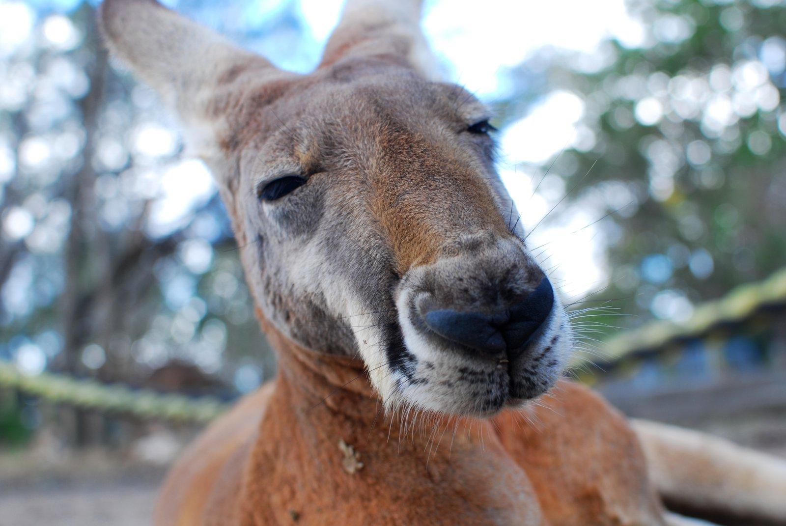Warum Australien das Land für einen Sprachaufenthalt ist