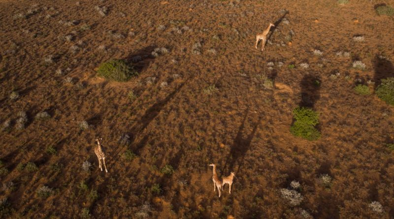 Drohnenbild Garden Route Kwandwe (c) Rhino Africa