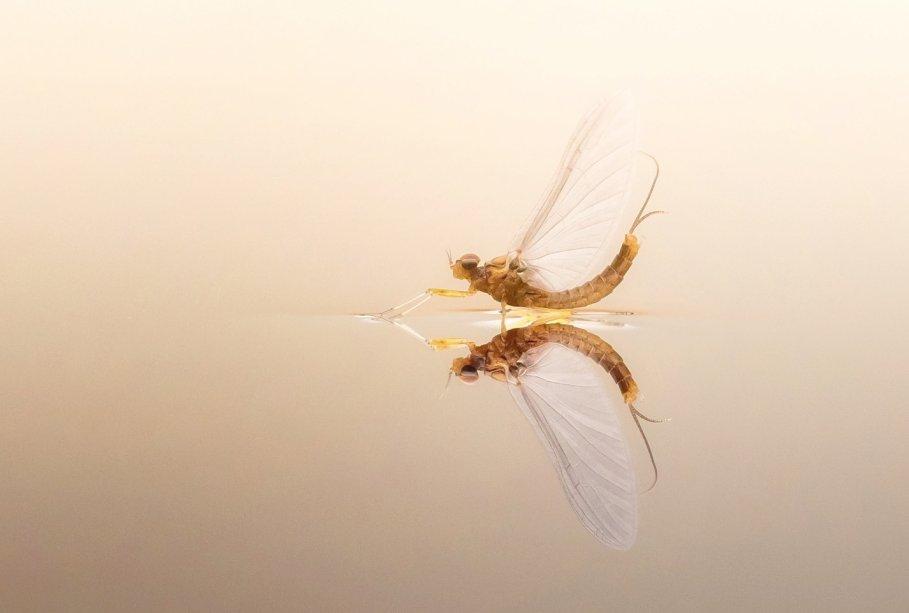Zu den besten Fotos gehören dabei auch zahlreiche Bilder von Schweizer Fotografen. Insgesamt wurden 9853 Aufnahmen von Fotoliebhabern aus der Schweiz eingereicht, so auch das atemberaubende Bild «Beauty of an insect... » von Matthias Kopp.